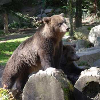 Parc Animalier Casteil